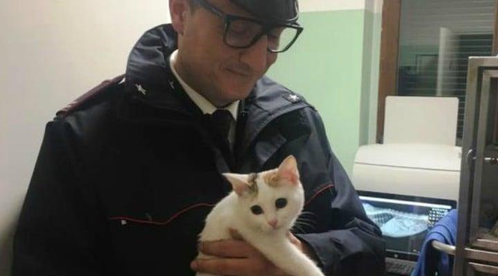 Româncă din Italia, riscă închisoarea după ce și-a aruncat pisica de la etajul 5 1