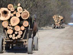 Încă un pădurar agresat de hoții de lemne, la doar o zi după ce un altul a fost ucis. Ar trebui jandarmii să meargă prin păduri și noroaie după hoți sau să stea la căldurică să apere politicieni? 6
