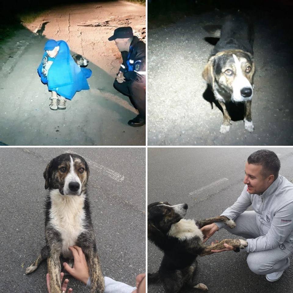 """(Foto) Cățelul erou din România ce i-a ținut de cald unui biciclist accidentat pe munte, a fost găsit și adoptat! """"Biciclistul a fost salvat de câine, care l-a protejat încălzindu-i trupul, până la sosirea jandarmilor. După ce am auzit povestea am fost ..."""" 1"""