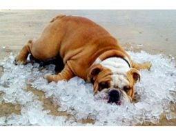 Cald, foarte cald. România, lovită de un val de căldură venit din Africa. Cum va fi vremea la Cluj, Brașov, București, Timișoara, Iași, Sibiu 7