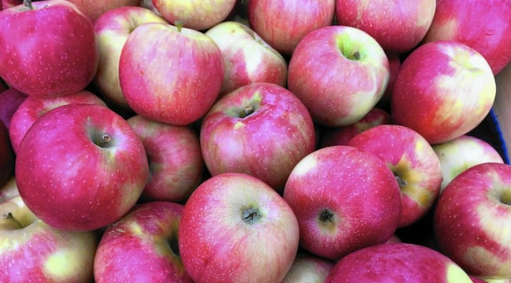 An foarte bun în România pentru mere. Producția de mere, aproape dublă față de anul trecut. Producătorii de suc natural nu mai fac față cererilor 1