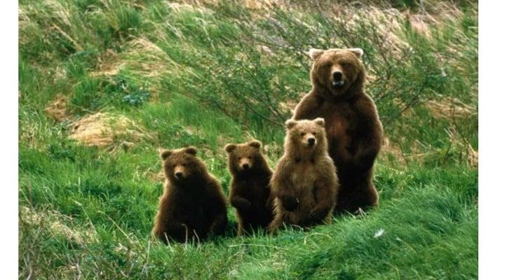 """Răspuns ISU. """"Mă f… în alerta voastră! De ce nu se ia o măsură în legătură cu ursul? Trebuie să ne frecati noaptea? Oamenii mai merg la muncă, dacă nu știați."""" 1"""