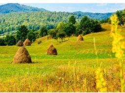 """O româncă din Anglia s-a întors în țară dar pleacă iar. """"Îmi spunea că dealurile pe care le vede venind de la Cluj la Zalău îi amintesc de cele din wallpaper-ul Windows dar ...Îţi trebuie curaj să îţi creşti copilul în România, cu sistemul de învăţământ actual, care ..."""" 36"""