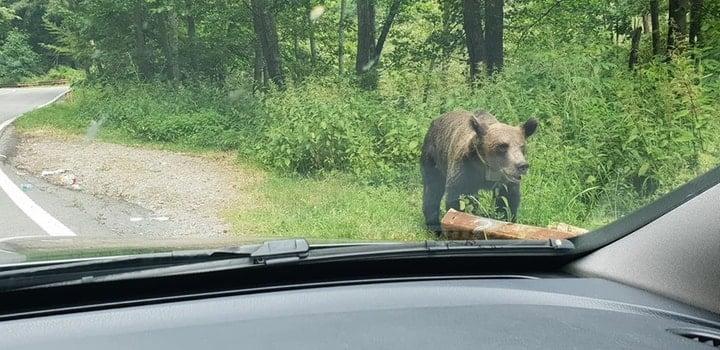 """(Foto) Razvan: """"Iartă-ne ursulețule ca nu mai ai păduri, nu mai ai casa. Noi suntem animalele, nu tu. Mesajul tău a fost foarte clar astăzi la Vidraru. """"Hrăniți-ma voi daca mi-ați distrus casa"""" 4"""