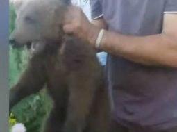 Reacție Poliție. Ursuleţ chinuit fără milă, după ce a fost capturat. Ce spun Polițiștii 3