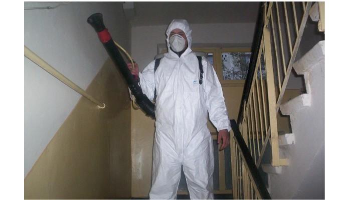Ellenőrizni fogják a rovar- és rágcsálóirtó cégeket