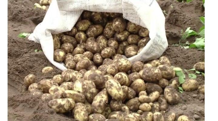 Românii ca egiptenii. Fermierii din Sahara Olteniei au scos primii cartofi noi. Prețul cu care se vând 1