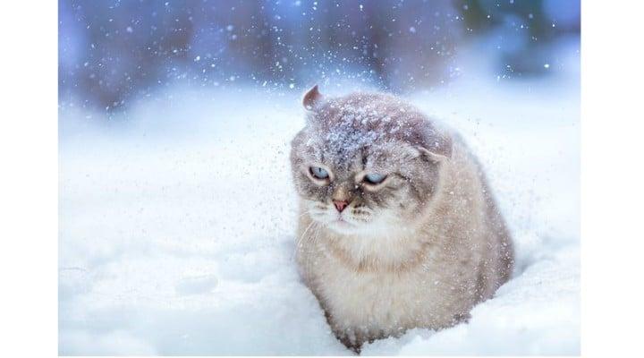 Ești pregătit? Iarna vine devreme şi ţine mult 1